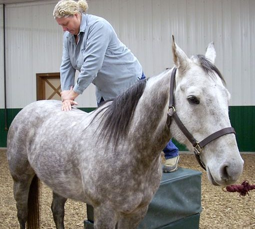 Image showing a horse receiving a back manipulation from a chiropracter
