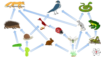 A GCSE science food web showing feeding relationships within an ecosystem. Changes to one organism will affect all the others in the food web.